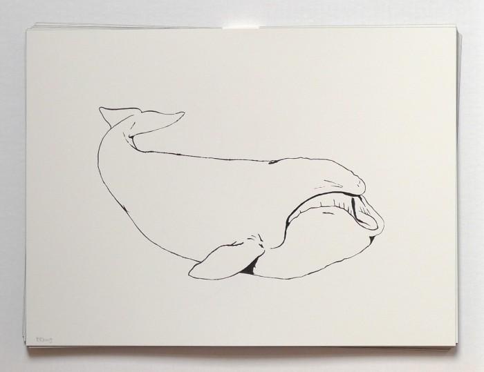 2009_whale