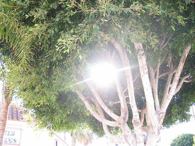 sun tree alvarado